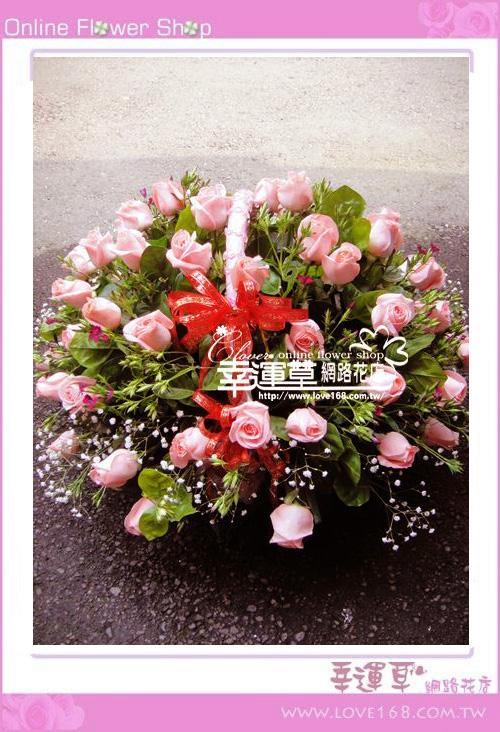 C48優質盆花