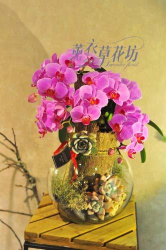 蝴蝶蘭&多肉植物 107110708
