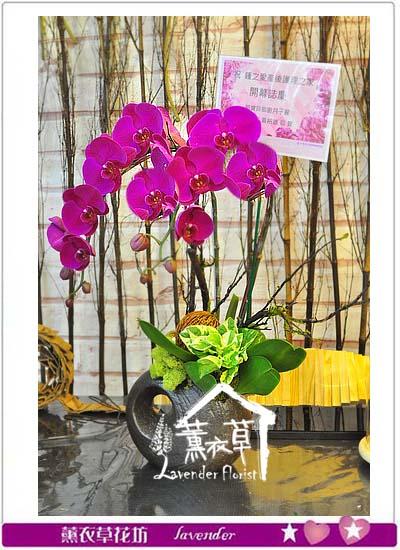 蝴蝶蘭設計 106070712