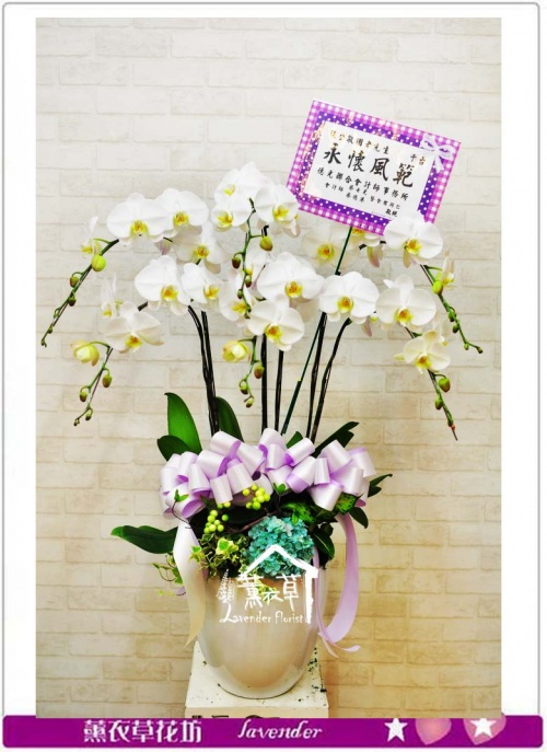 高雅蝴蝶蘭b052420