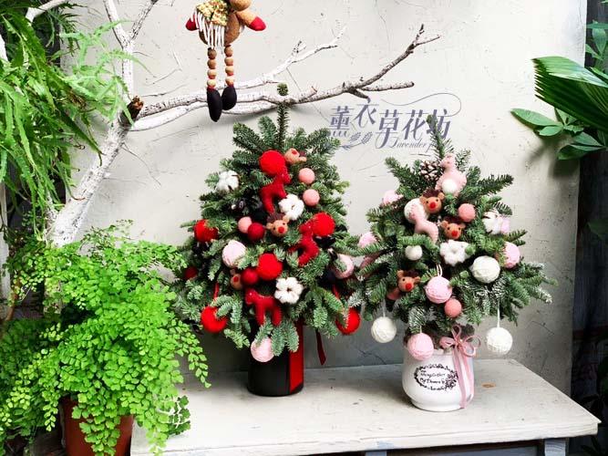 聖誕樹~諾貝松 107120508