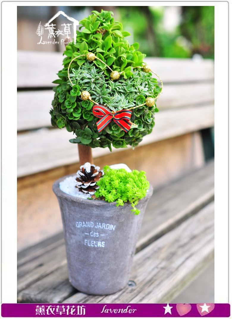 多肉植物~愛情樹a112418
