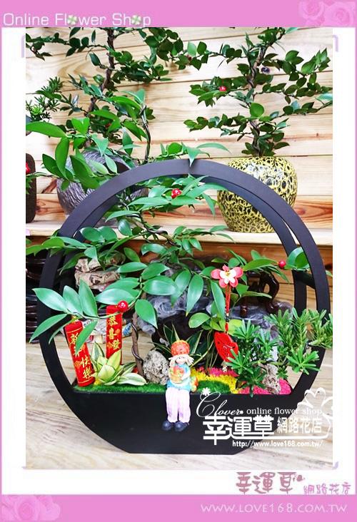 E077竹柏組合盆栽
