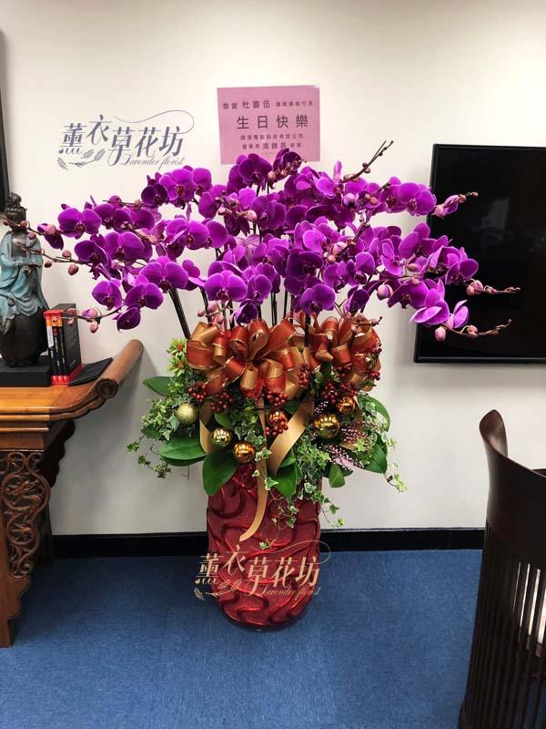 蝴蝶蘭/蘭花盆栽 108010713