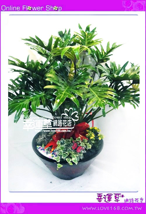 E73小天使盆栽