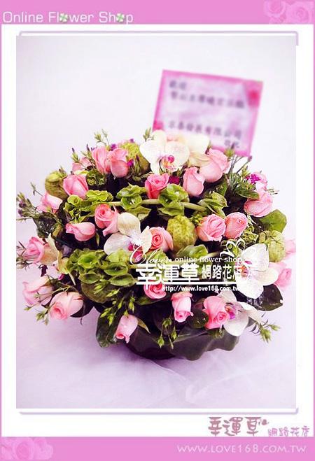 C39優質盆花