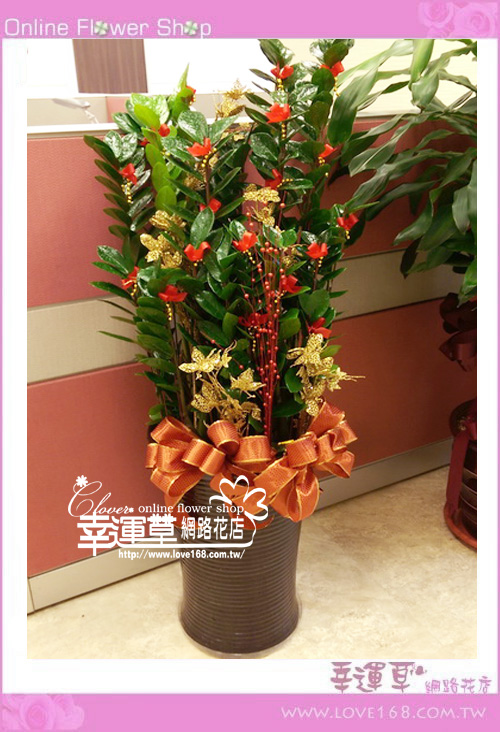 E0107金錢樹盆栽