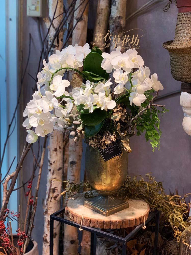 迷你白色蝴蝶蘭設計 108030606