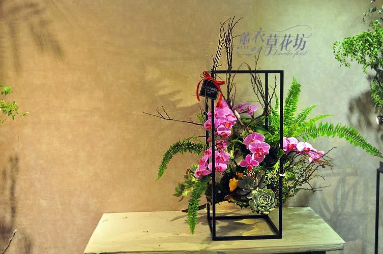 蝴蝶蘭設計~架構式 107102912