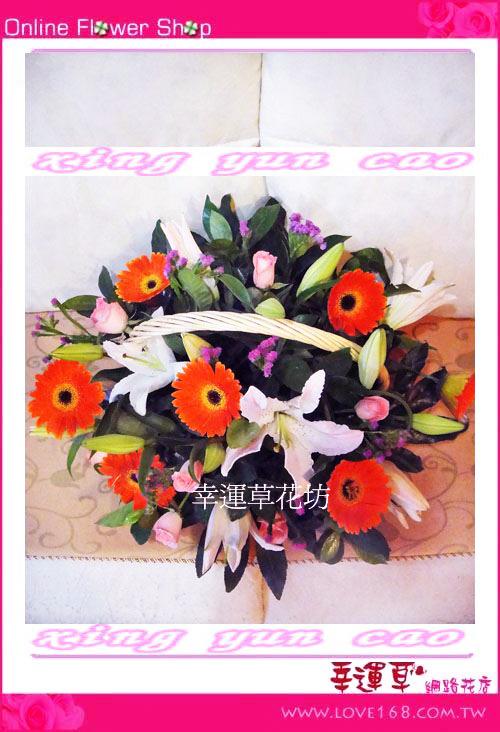 C18優質盆花