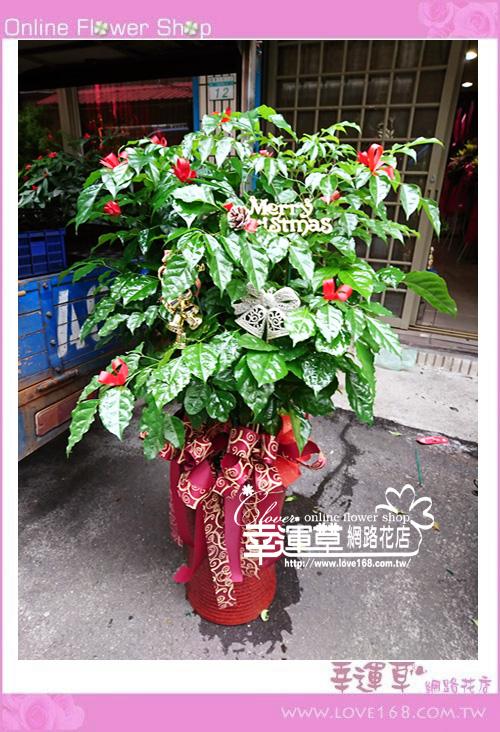 E1224招財樹盆栽