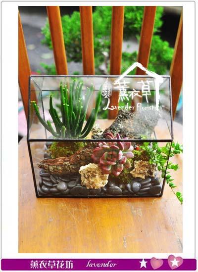 生態缸設計~房子款106020407
