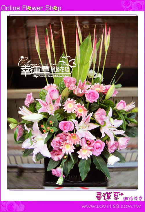 C50 優質盆花