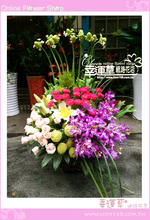 C58優質盆花