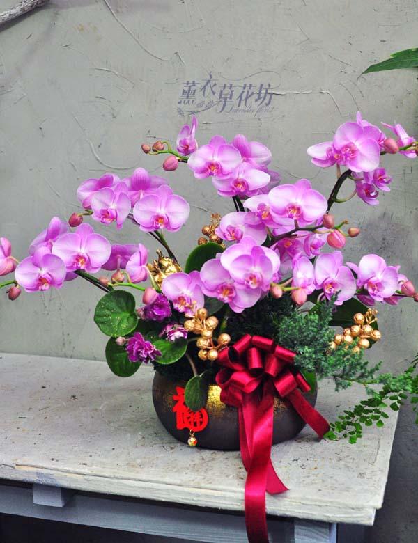蝴蝶蘭/蘭花設計108011602