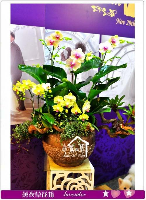 蝴蝶蘭設計a060813