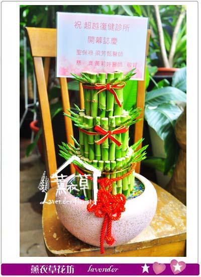 開運竹盆栽 106092514