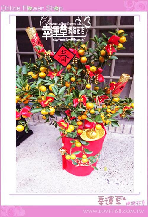 E0130金桔組合盆栽~新年限定