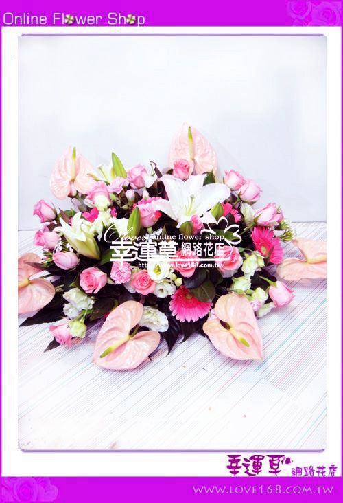 C06優質盆花