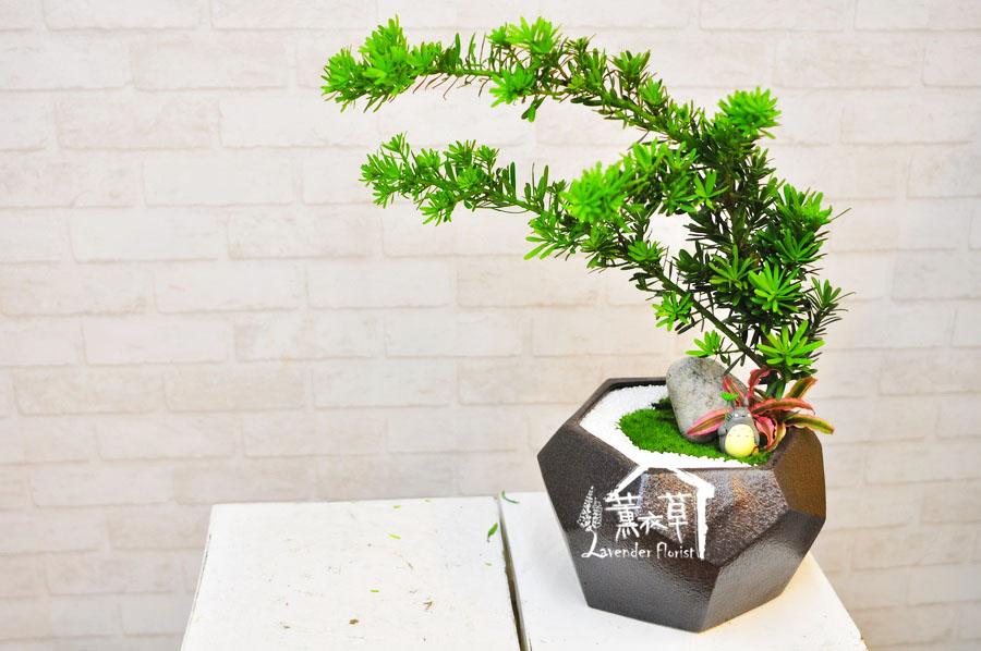 羅漢松組合盆栽B092210