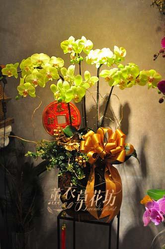 蝴蝶蘭/蘭花/設計108011605