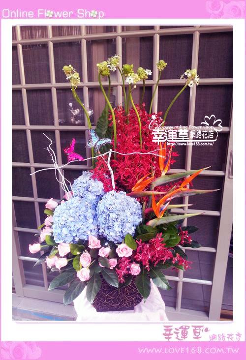 C53優質盆花