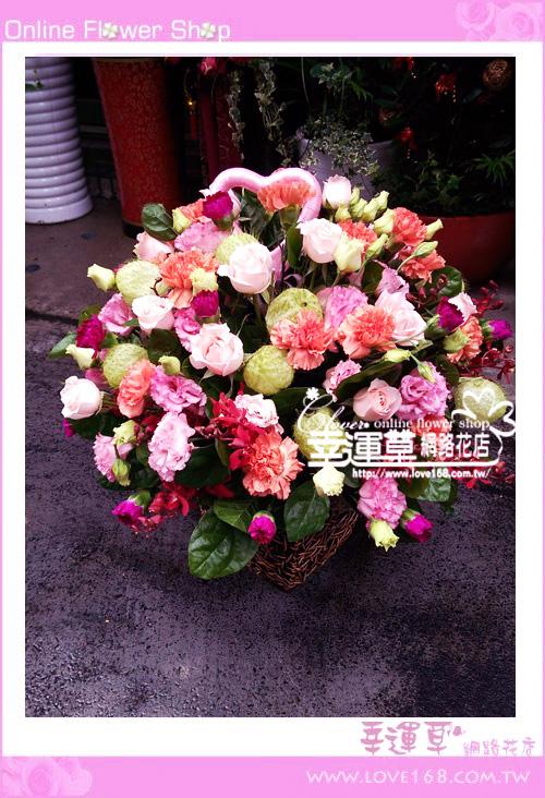 C57優質盆花
