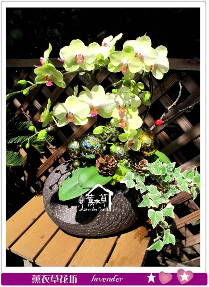 高雅蝴蝶蘭c070804