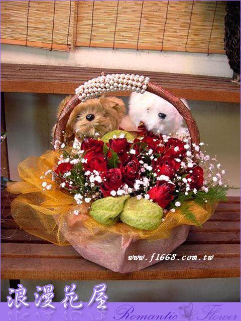 F14熊熊盆花