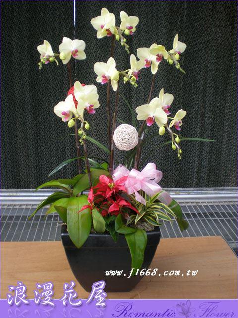 D44高雅蘭花