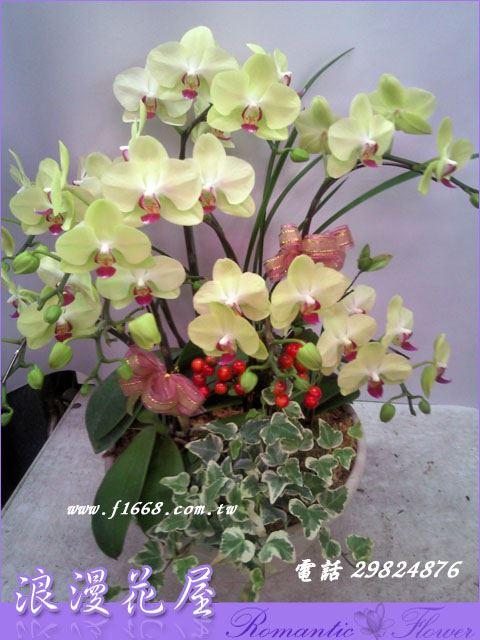 D62高雅蘭花