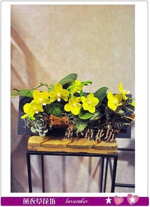 黃金蝴蝶蘭設計107092003