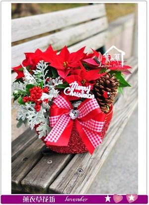 聖誕節精緻盆栽A120123