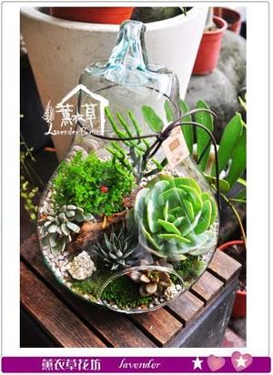 多肉植物&燈泡玻璃缸生態設計 107062601