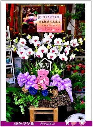 高雅蝴蝶蘭10株y10027