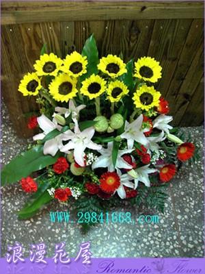 太陽花盆花 F05