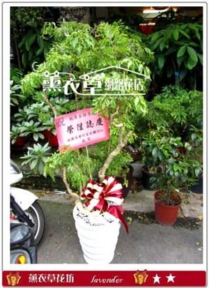 富貴樹c100301