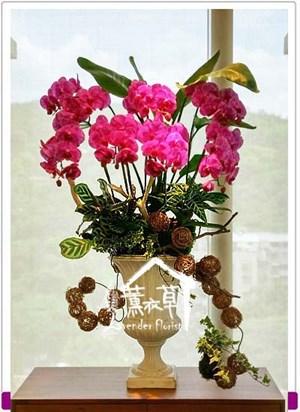 蝴蝶蘭設計106091009