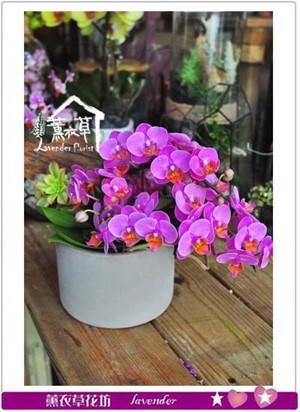 迷你蝴蝶蘭設計 107050215