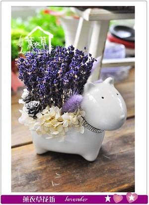乾燥花系列~小品設計 新款特賣107041605