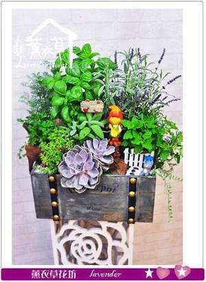 香草&多肉盆栽設計106081631