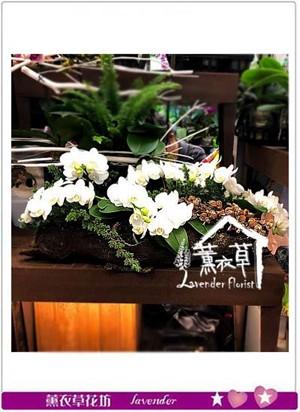 蝴蝶蘭設計 106120708