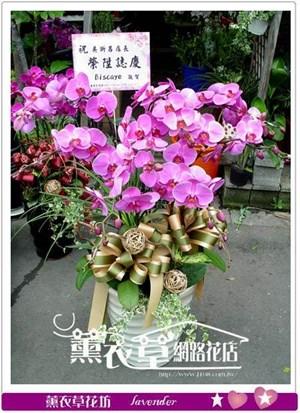 蝴蝶蘭禮盆8株y4549