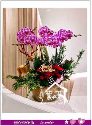 蝴蝶蘭設計 106121409
