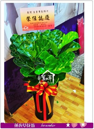 琴葉盆栽a112424