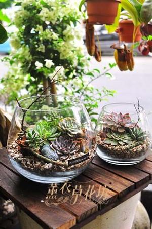 玻璃缸&搭配多肉植物設計107092911