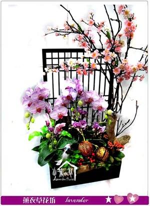 日式蝴蝶蘭~櫻花款C012027