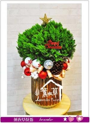 球球龍柏盆栽 106112012