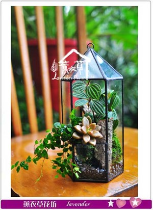 玻璃植物生態設計B12206