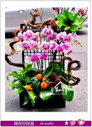 高雅蝴蝶蘭~日式款c090407